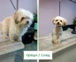 Салон-за-красота-5-Ветеринарна-клиника-Елпида-Варна
