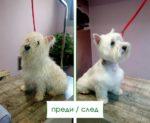 Салон-за-красота-4-Ветеринарна-клиника-Елпида-Варна