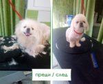 Салон-за-красота-3-Ветеринарна-клиника-Елпида-Варна