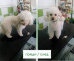 Салон-за-красота-2-Ветеринарна-клиника-Елпида-Варна