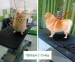 Салон-за-красота-Ветеринарна-клиника-Елпида-Варна