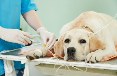 Хирургия-услуги-във-ветеринарна-клиника-Елпида