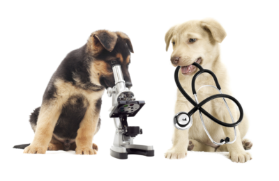 Ехография - Ветеринарна клиника Елпида