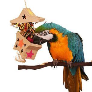 Големи-папагали-щастливи-ли-са-те