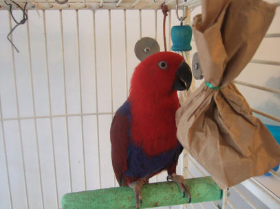 Папагали-Щастливи-ли-са-те-Ветеринарна-клиника-Елпида