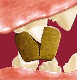 Зъбен камък при кучета и котки - Ветеринарна клиника Elpida