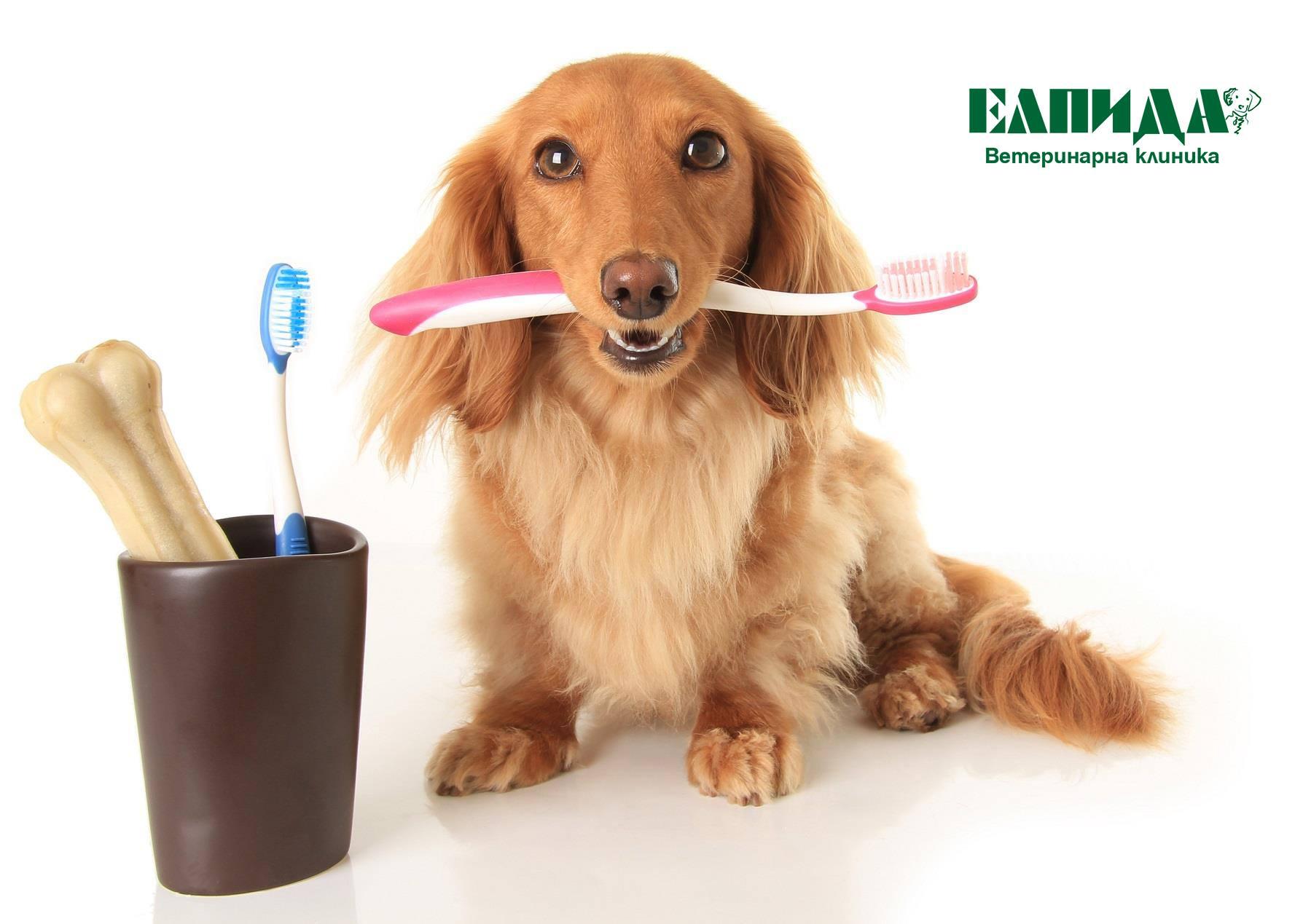 Зъбен камък при кучето и котката - Ветеринарна клиника Elpida