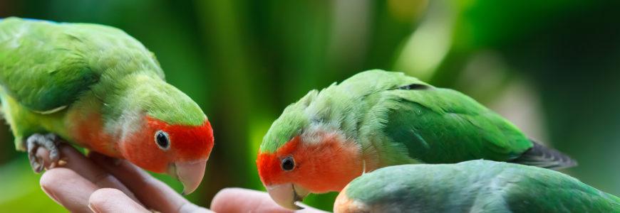 Хранене при папагали - Ветеринарна клиника Елпида