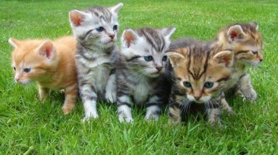 Грижи за котето - Ветеринарна клиника Елпида