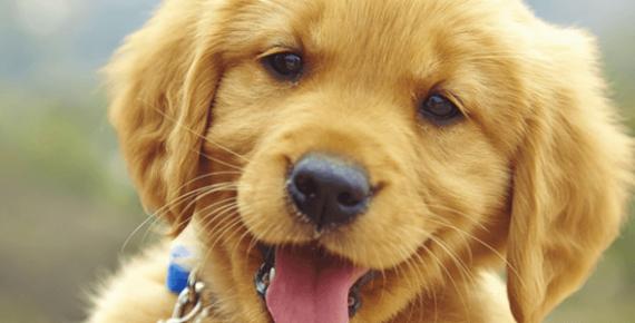 Регистрация-на-кучета-Ветеринарна-клиника-Елпида-Варна
