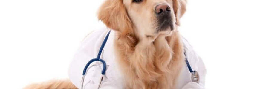 Ехография-Ветеринарна-клиника-Елпида