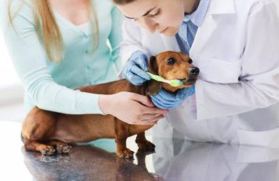 Дентална-медицина-Ветеринарна-клиника-Елпида