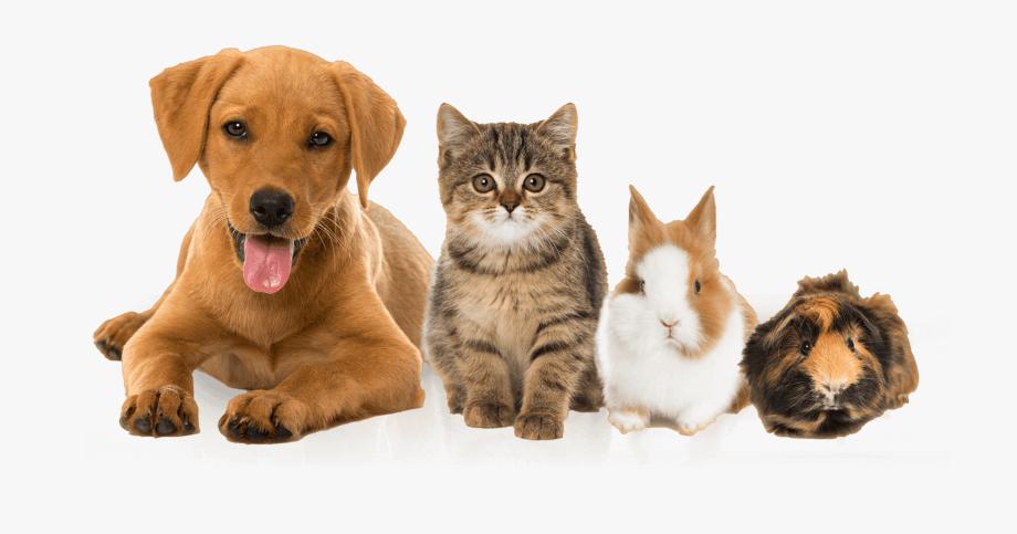 Ветеринарна-клиника-Елпида-Варна